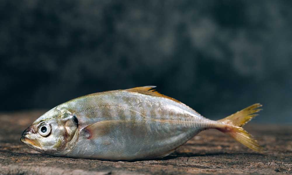 beneficios-pescado